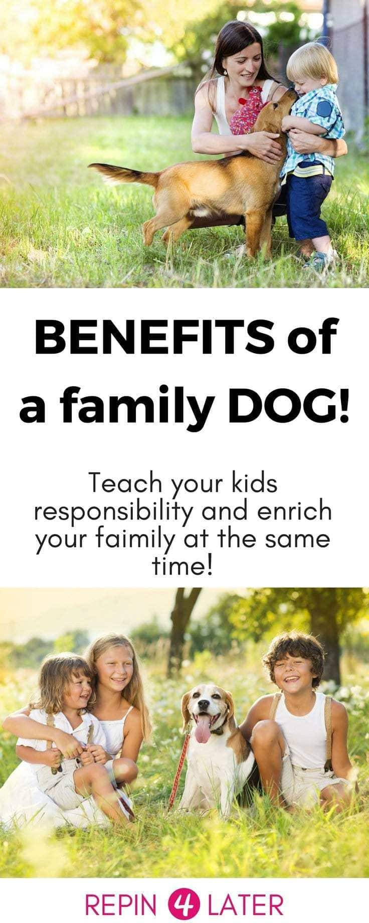 Getting a family dog can be so amazing for your family! And it's also a great way to teach your kid responsibility! #kidresponsibility #responsibility #kidchores #familydog #familypet